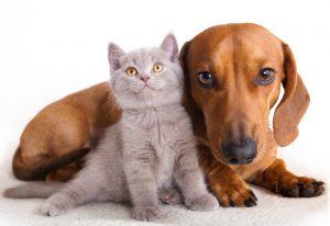mascotas-cuales-si-y-cuales-no-para-tus-hijos-1